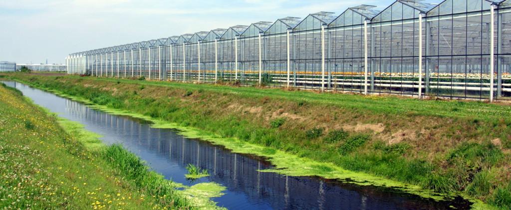 KLAZIENAVEEN:260701>Glas Tuinbouw gebied Z.O. Drenthe kassen